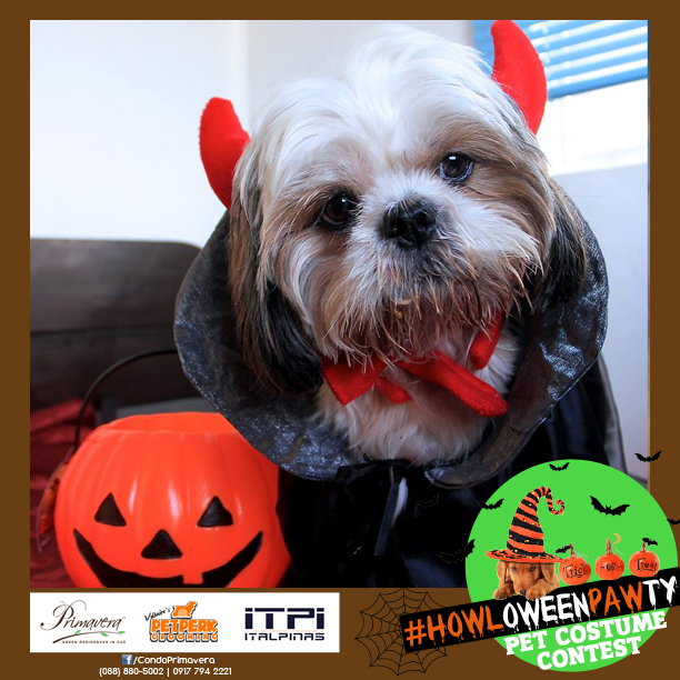 One of the entries in Primavera's #HOWLoweenPAWty pet costume contest. Vote for your favorite entries HERE.