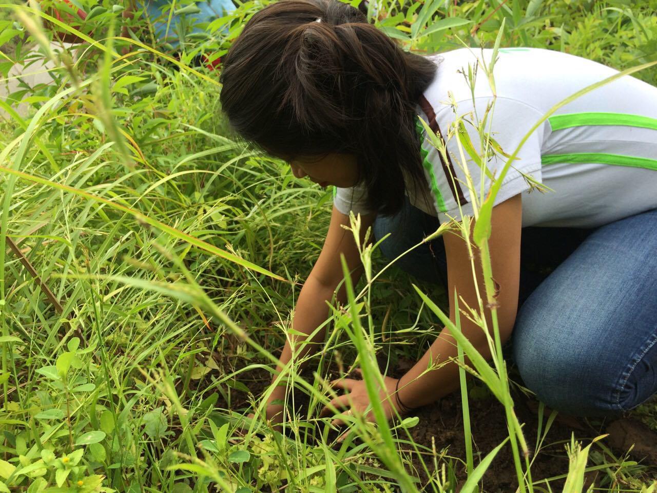 Tree Planting (7)